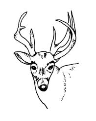 Ancient People - Deer