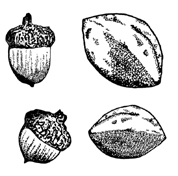 Ancient People - Nuts